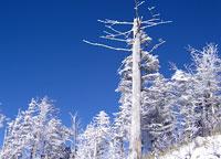 white_woods580