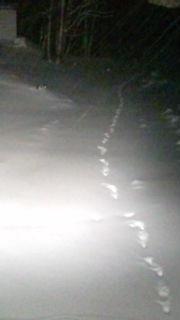 信州松本・奈川 奈川高原 フォーレストフィールド  新雪の足跡