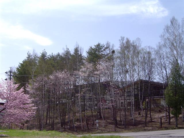 池から見た温泉宿山荘わたり
