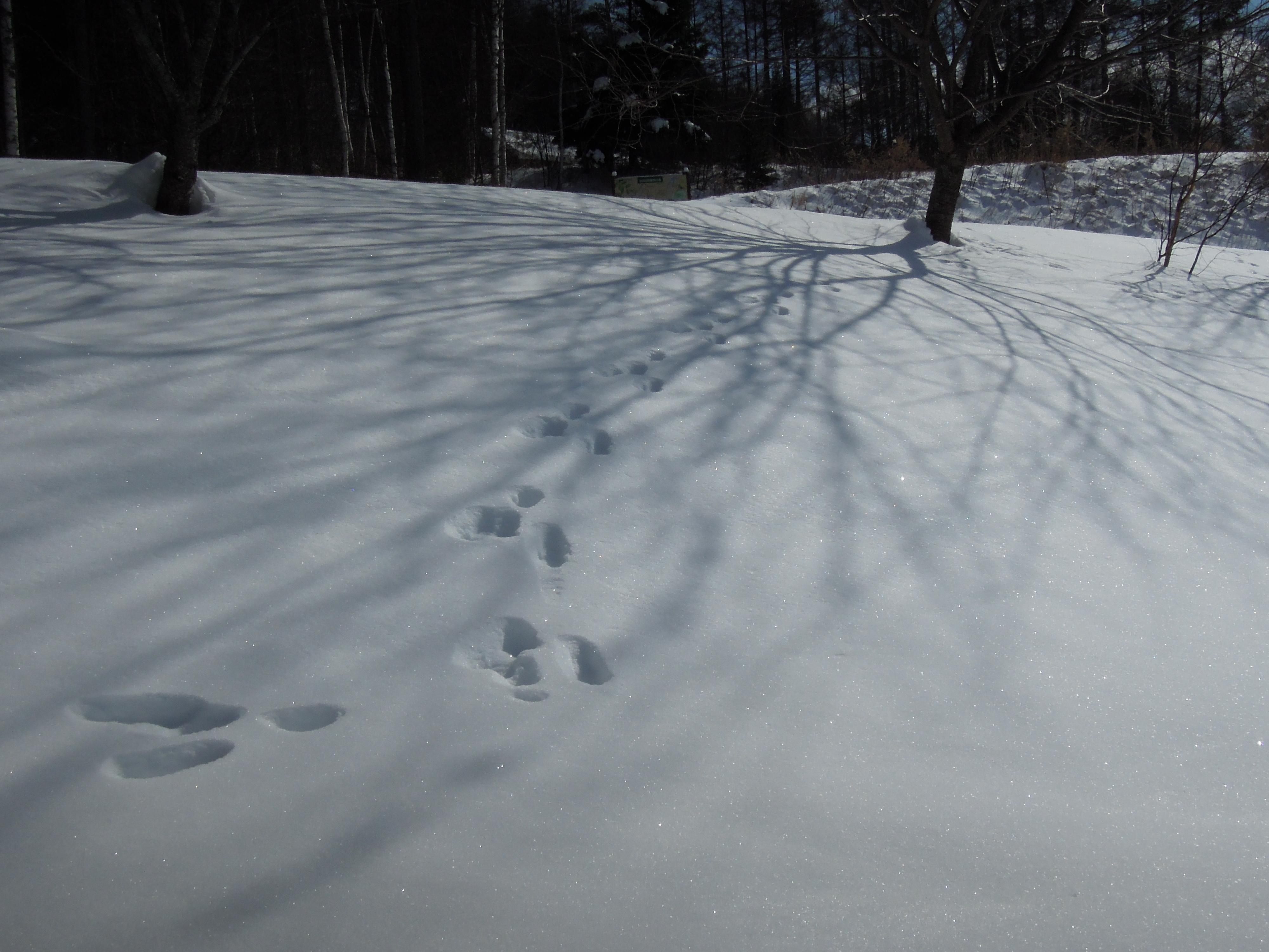山荘わたりHPトップ_信州松本奈川 ウサギの足跡