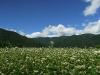 ソバ畑と青空