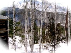 温泉宿山荘わたり_露天風呂からの冬景色