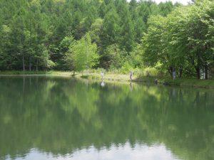 木々の緑も濃く虫も多くなり始めライズが多く見られるながわフィッシングエリア